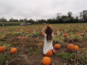 ハロウィン用のかぼちゃをファームでゲット!
