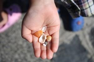 友達のおみやげに、とひたすら貝殻を集めていた子供たち。